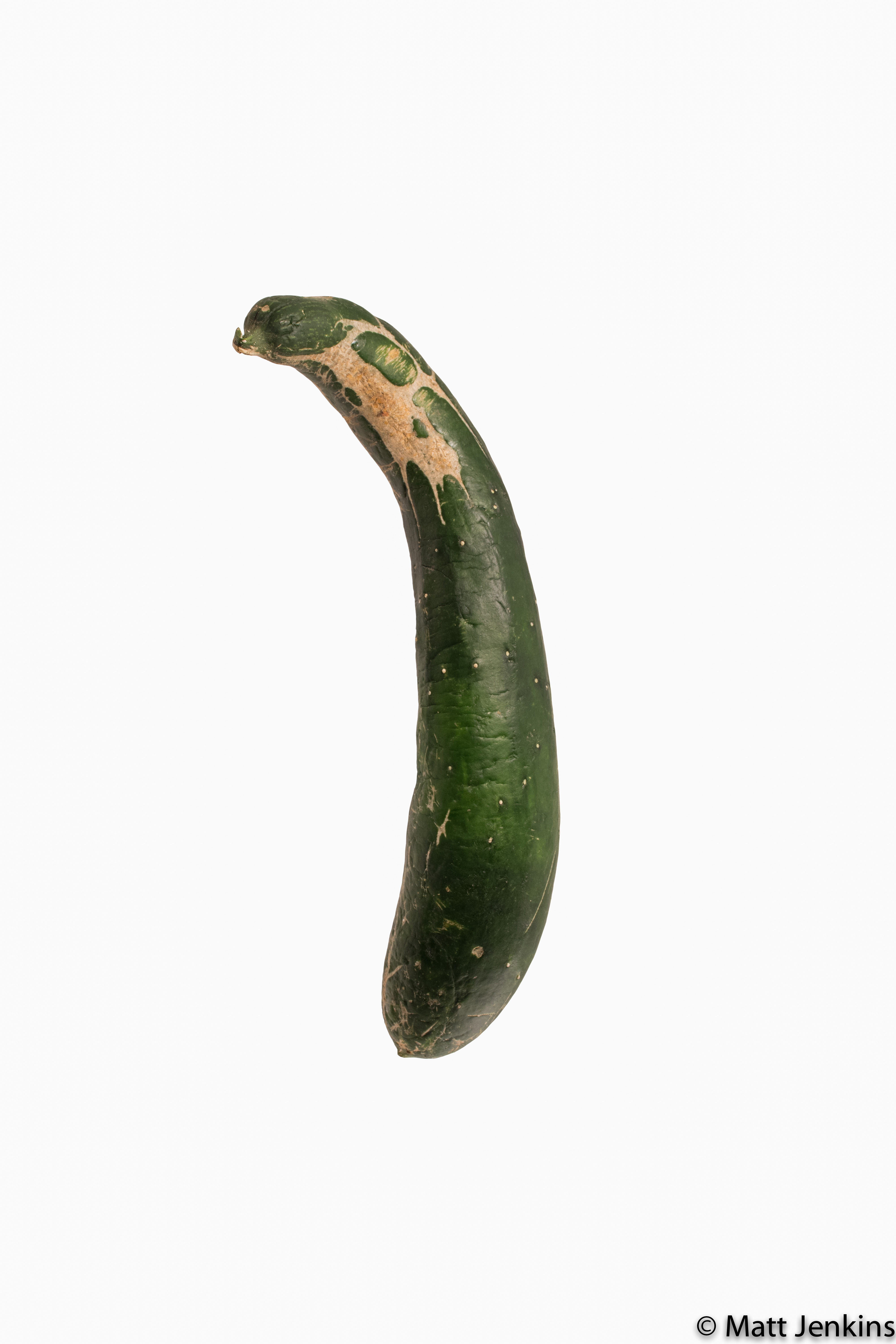 An aesthetically flawed zucchini on white background.
