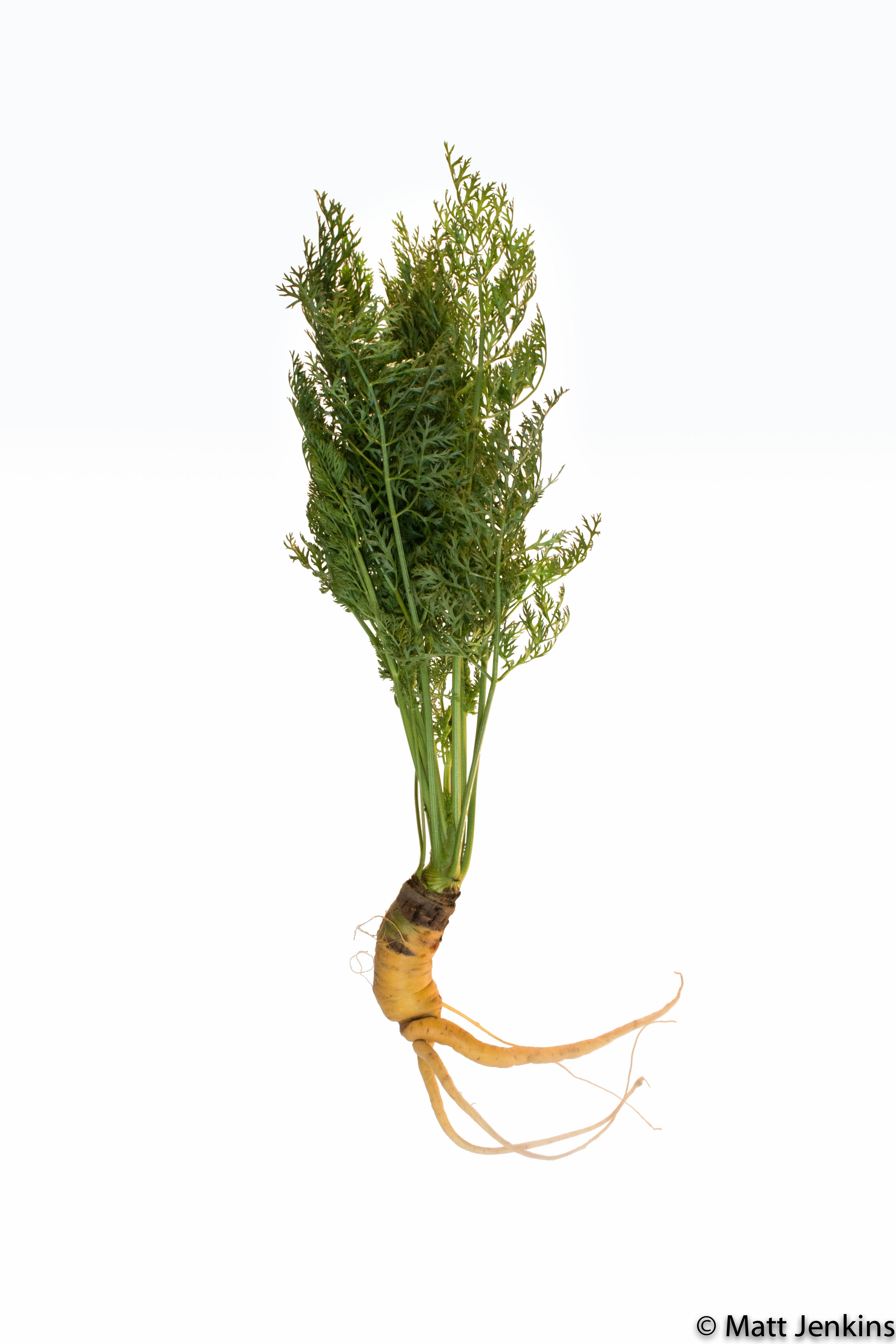 A aesthetically flawed carrot on white background.